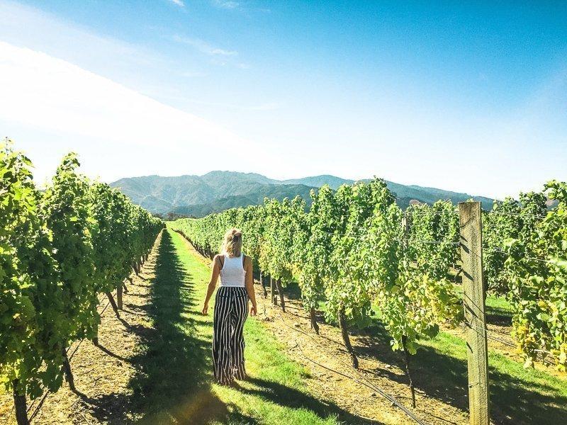 Marlborough is een van de mooiste gebieden in Nieuw-Zeeland, dankzij de groene omgeving en de ruige bergen. Hier vind je tal van wijngaarden.