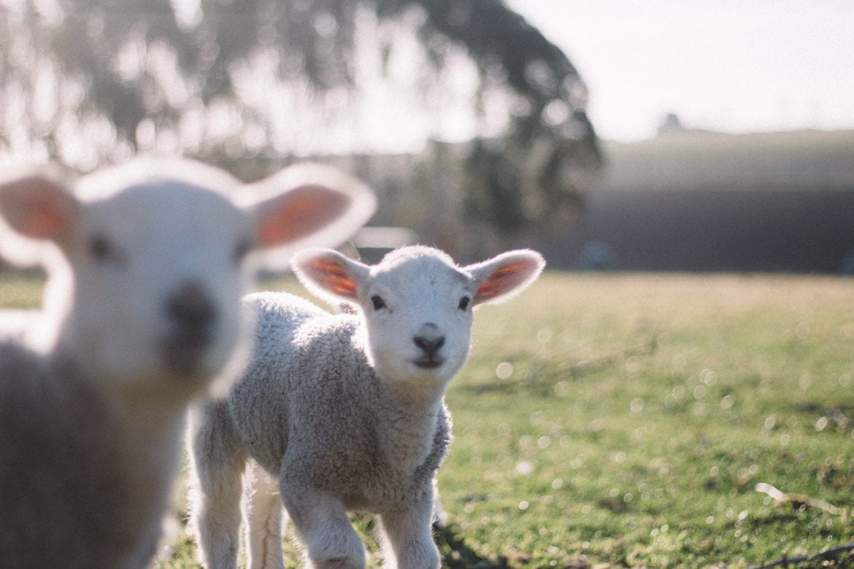 Wat Te Doen Met Pasen 2019 De Leukste Uitjes Op Een Rij