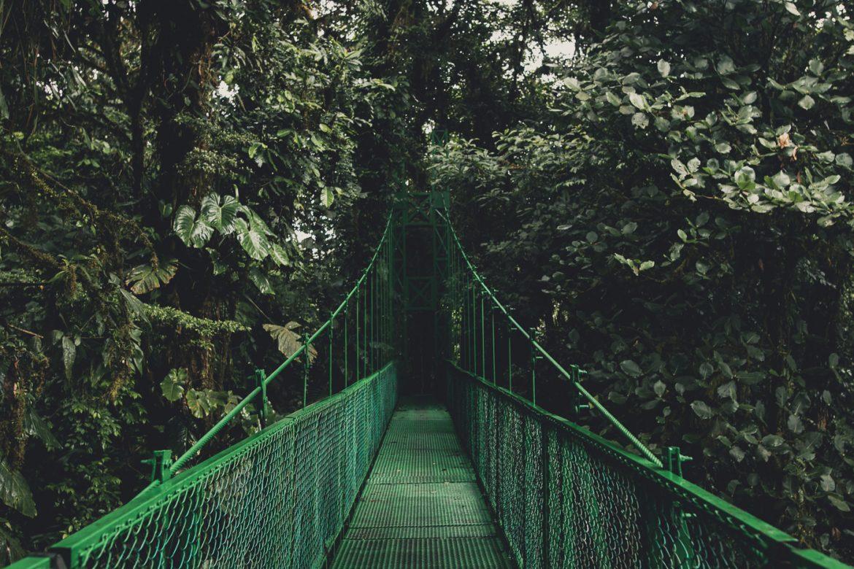 Hier vind je alle tips voor Monteverde in Costa Rica, inclusief de cloud forest!