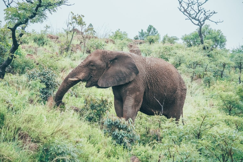 Niet naar Krugerpark