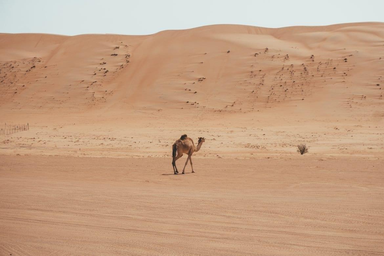 13x waarom je een Oman rondreis moet maken