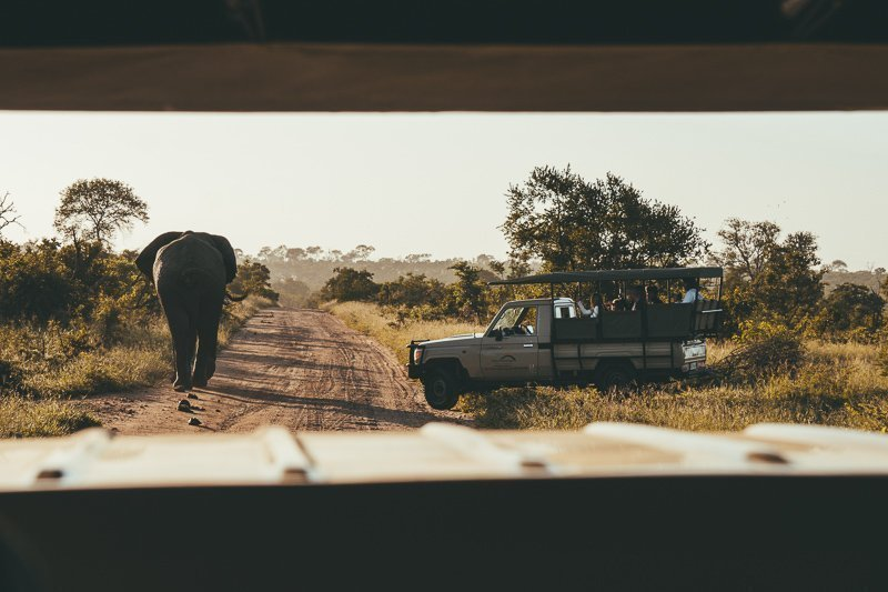 And of course: you can't miss Krugerpark during your South Africa safari itinerary!