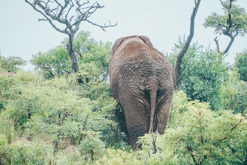 Next up of the South Africa safari trip is the Mapungubwe National Park.