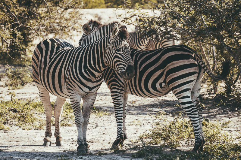 This is such a special place during your South Africa safari route!