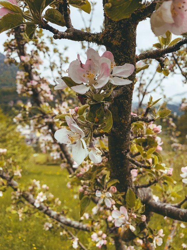 Je vindt er prachtige bloemen en bomen in de lente.