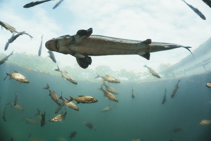 Hier vind je bijvoorbeeld het grootste onderwater aquarium van heel Tsjechië!