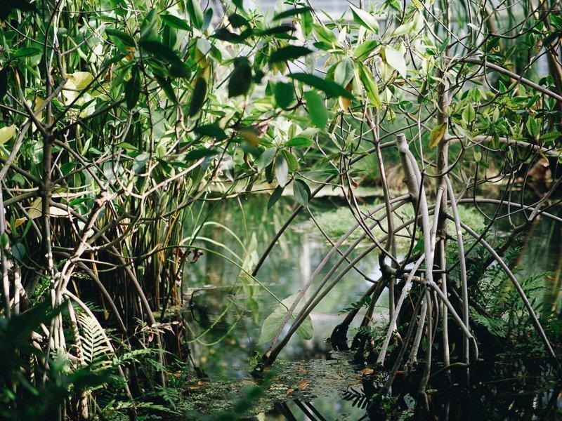 Ontdek de mangroven per kajak.
