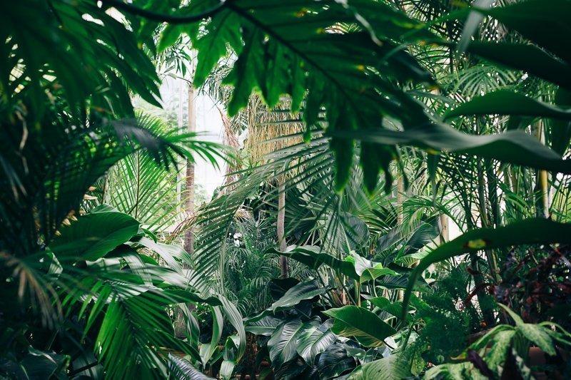Houd het vakantiegevoel vast met een tropisch huis vol planten.