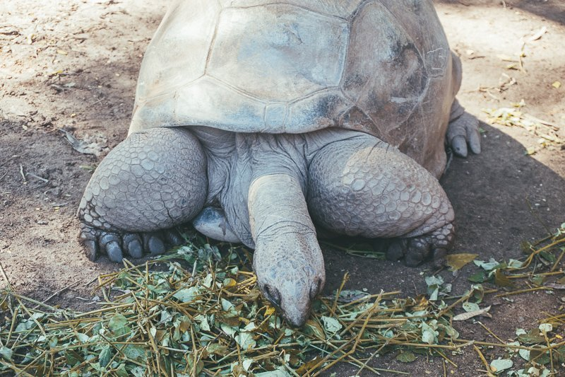 Je kunt ook schildpadden spotten.
