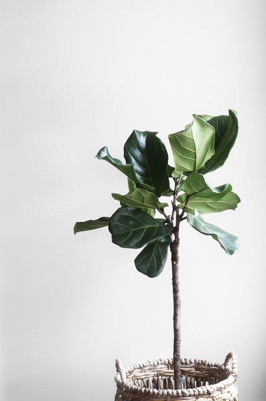 Op zoek naar wooninspiratie voor reizigers? Koop een hoop planten!