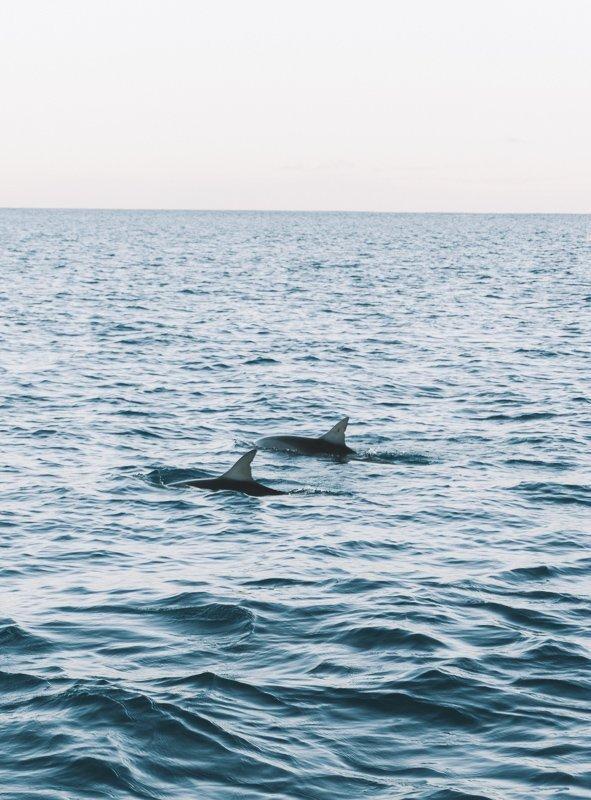 Dolfijnen spotten vanaf de boot.