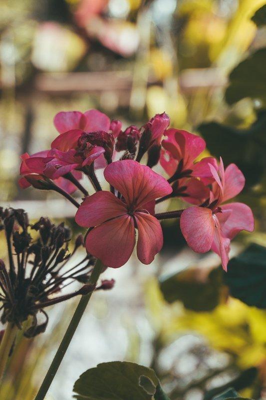 Op Mauritius eiland kom je veel bloemen tegen.