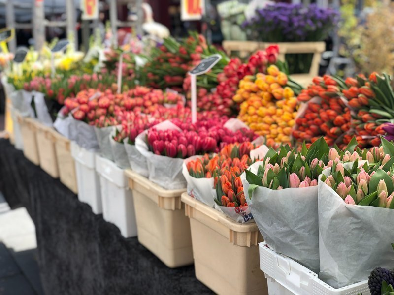 The flower market is definitely a nice place to visit in the capital of The Netherlands