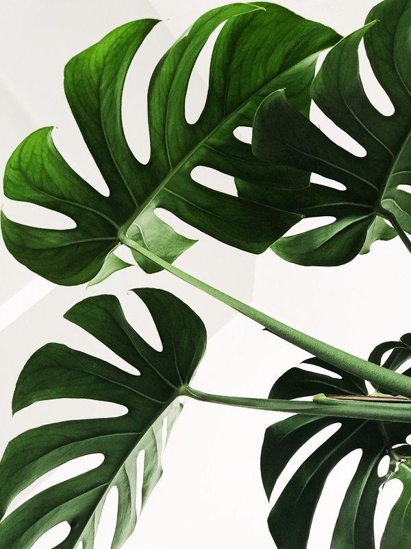 Zet genoeg planten in huis neer om het reisgevoel in huis te halen.