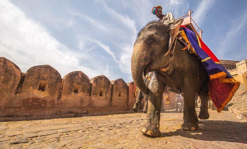 Ga tijdens het reizen nooit op een olifant zitten. Dat is echt iets wat je niet moet doen op reis.