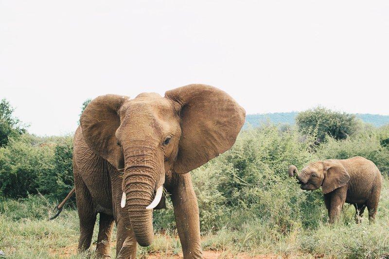 Doe van tevoren altijd goed onderzoek naar het olifantenopvangcentrum die je wilt bezoeken. Soms zijn ze niet diervriendelijk.
