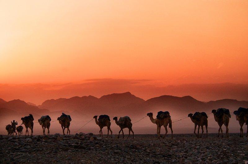 Slapen in de woestijn is absoluut een van de reiservaringen die je ooit moet hebben meegemaakt.