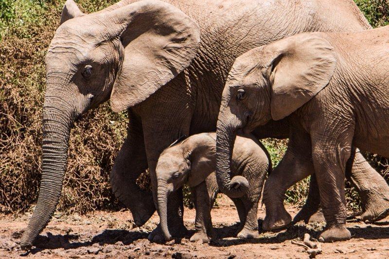 Een safari-reis in Afrika is natuurlijk een must als je van reizen houdt.