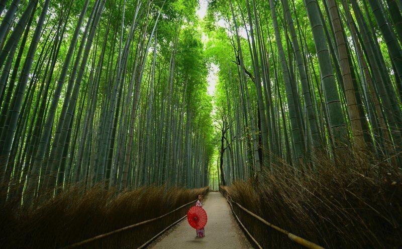 Ga je een Japan reis voorbereiden? Reken dan minimaal drie weken voor dit geweldige land.