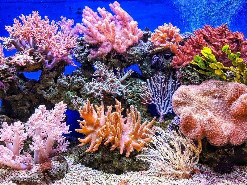 Raak op reis nooit koraal aan, koop nooit iets met koraal erin en pak koraal nooit op.