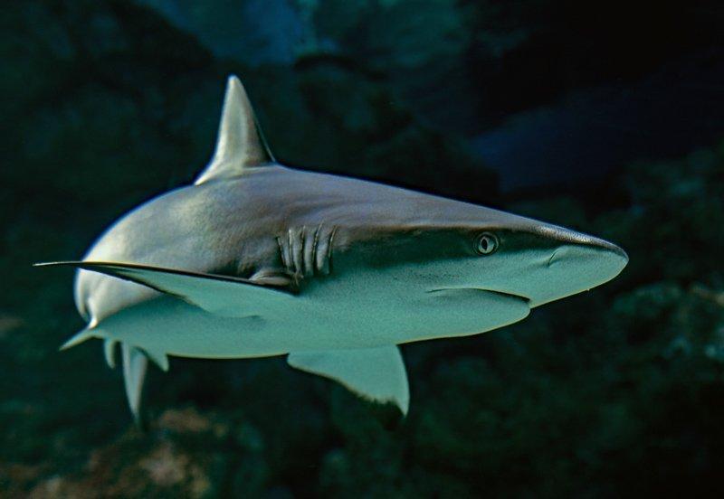 Eet nooit gerechten met haaienvlees hierin. Dit is absoluut niet diervriendelijk.