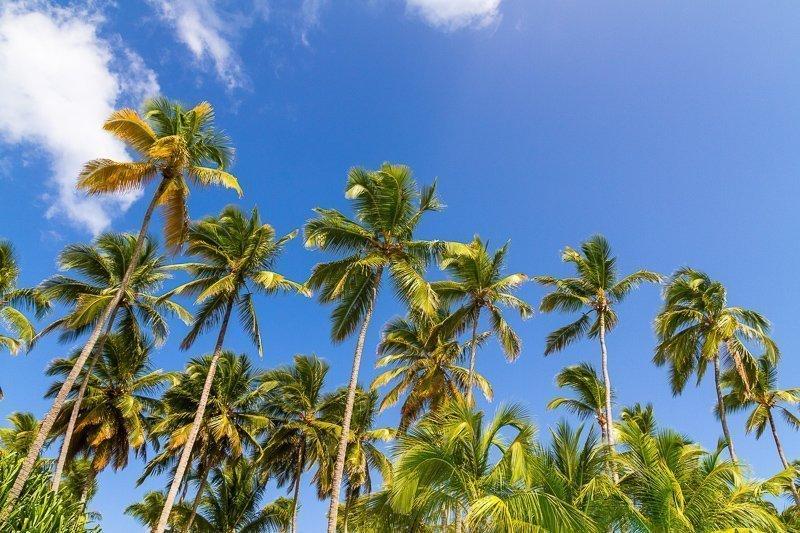 De Domincaanse Republiek is ideaal voor strand en zonaanbidders die aan onze grauwe winter willen ontsnappen.