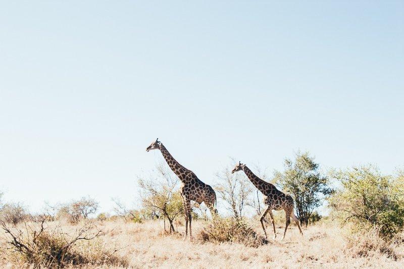 Zuid-Afrika is de ideale bestemming in onze winter, zeker het zuidwesten.