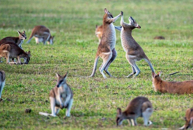 Ook Australië is een ideale zonnestemming in de winter, waarbij temperaturen kunnen oplopen tot maar liefst 40 graden.