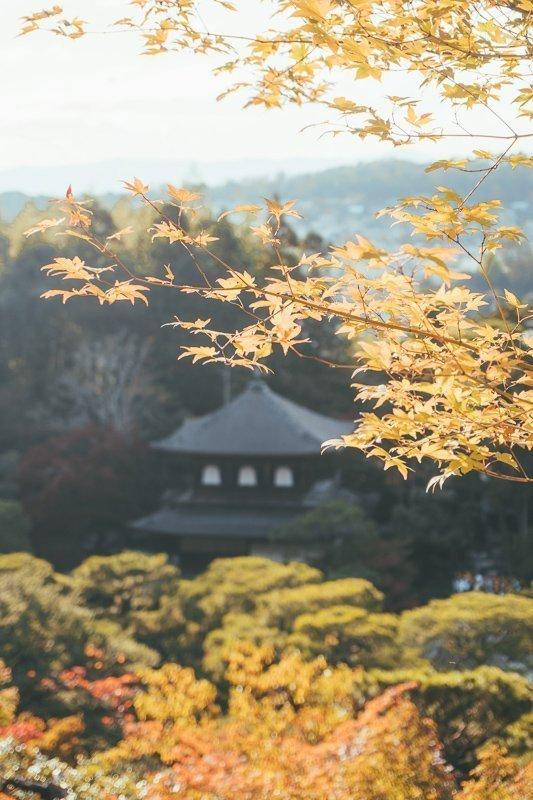 De Tenryu-ji tempel in Kyoto vond ik werkelijk prachtig, vooral de tuin.