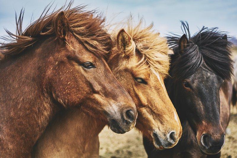 Maak een mooie paardrijdtocht als je in de zomer in Yllas bent.