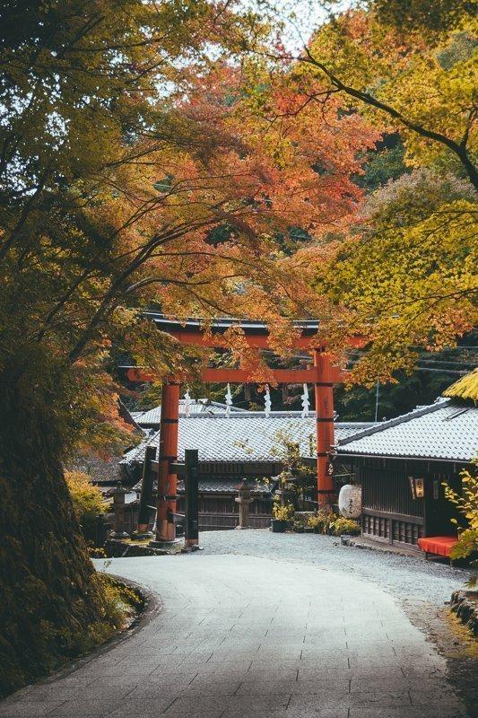 Mooie herfstkleuren en tempels in Oost-Azië.