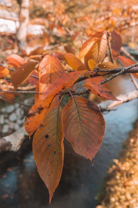 Mooie herfstkleuren bij het filosofenpad.
