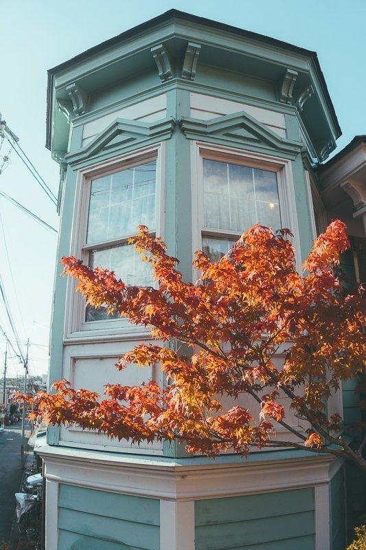 Het filosofenpad in Kyoto kent de mooiste bomen en gebouwen.