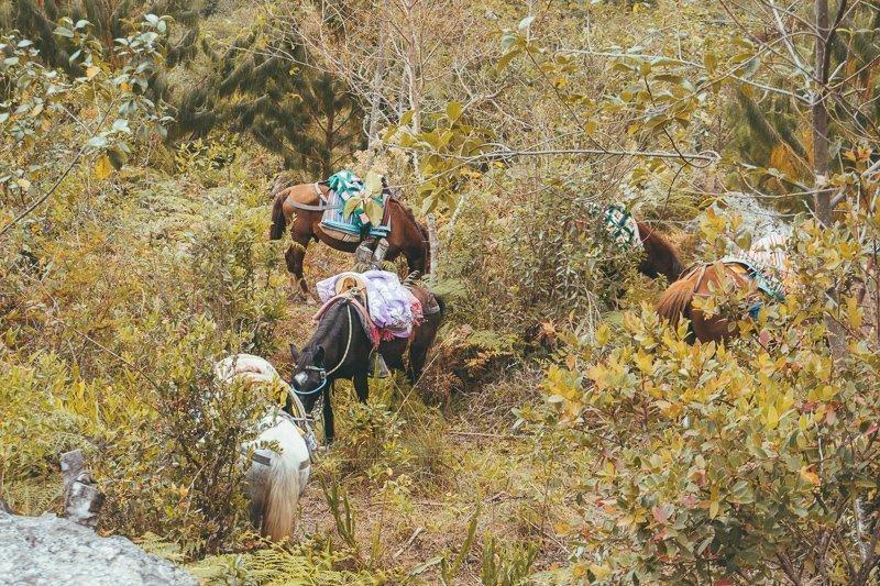 Gocta is een hele toffe trekking in het noorden van Peru.