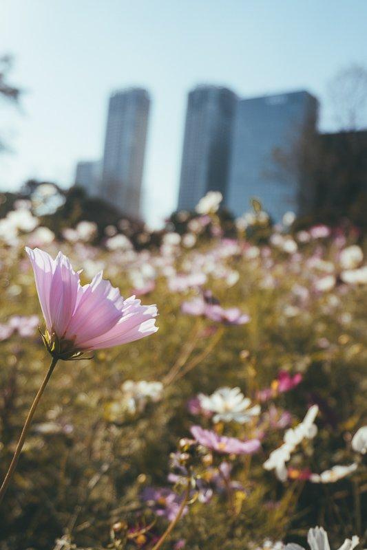 In Japan kun je steden en natuur goed combineren.