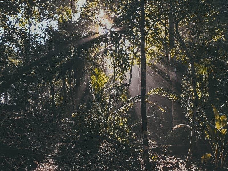 De natuur in het Corcovado Nationaal Park is werkelijk prachtig!