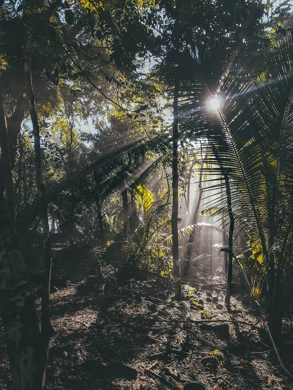 De waanzinnige natuur van Costa Rica.