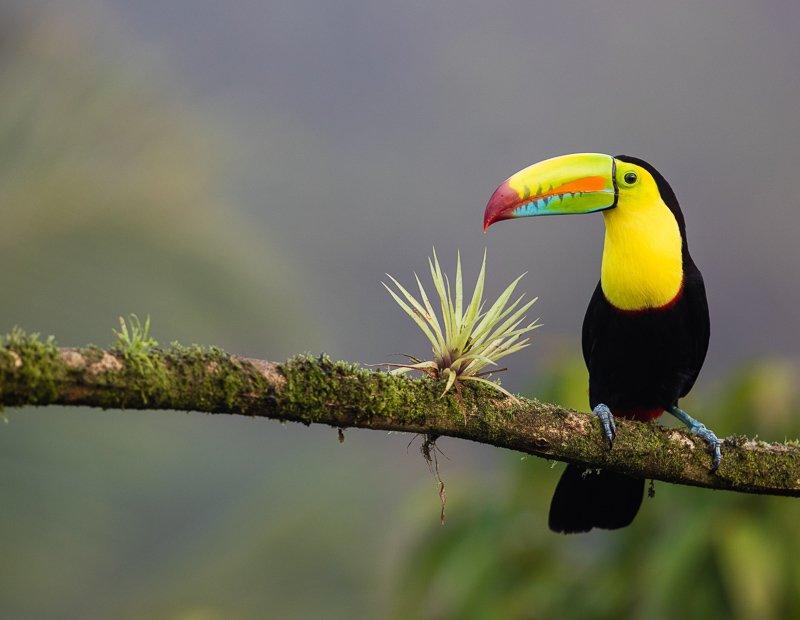 Combineer Costa Rica met buurlanden Nicaragua en Panama voor de ultieme reis!