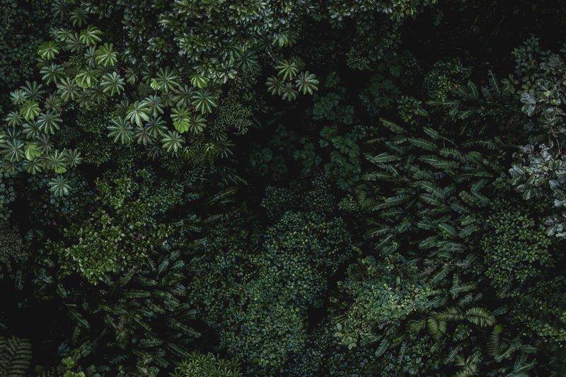 Drone shot in Costa Rica, boven het Corcovado Nationaal Park.