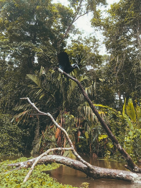 Costa Rica kent fantastische natuur.