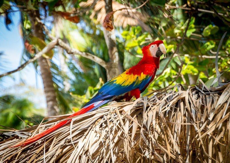 Prachtige natuur tijdens een backpack reis in Costa Rica.