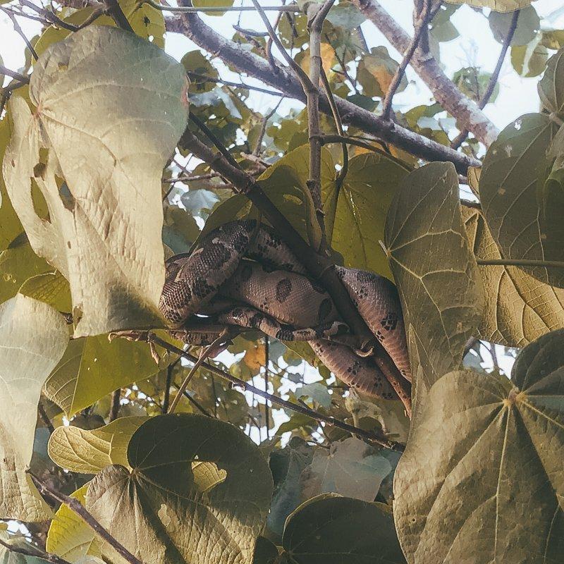 In het nationaal park Corcovado in Costa Rica kun je dieren zoals slangen spotten.