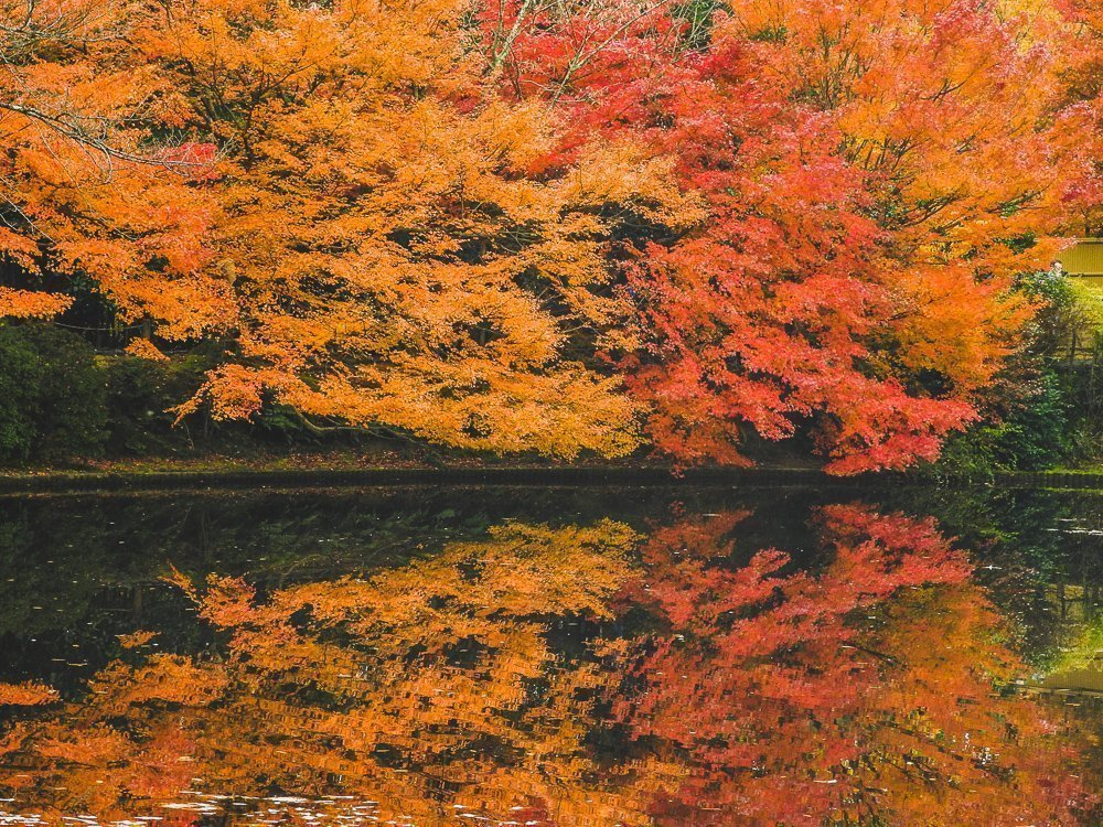 Prachtige herfstkleuren in Noord-Japan.
