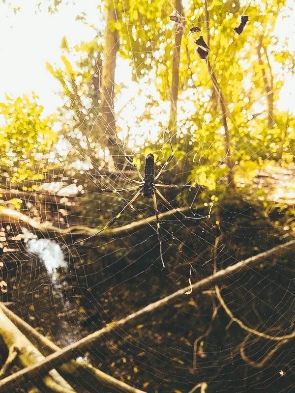 In het regenwoud kom je ook grote spinnen tegen.