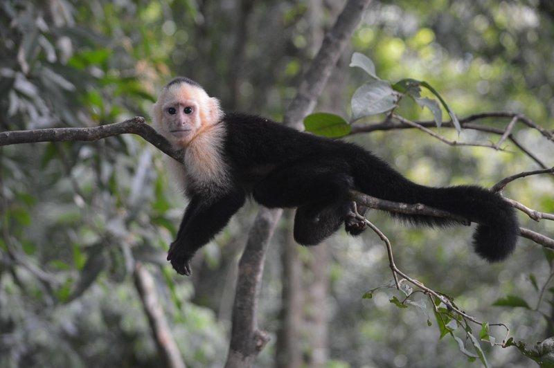 Ga je backpacken in Midden-Amerika? Duik dan zeker de natuur in en spot wildlife!