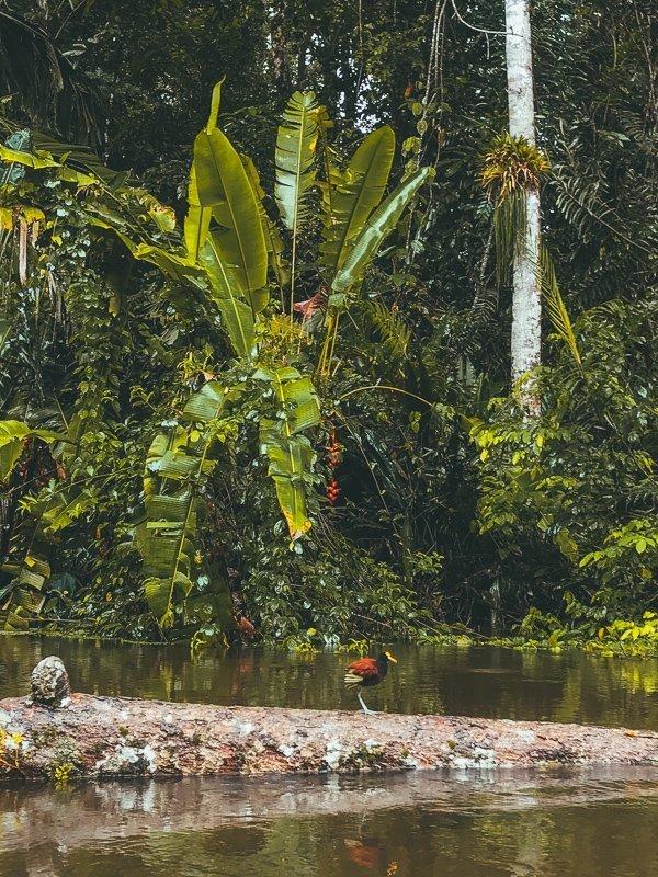 De natuur in Midden-Amerika is fantastisch mooi.