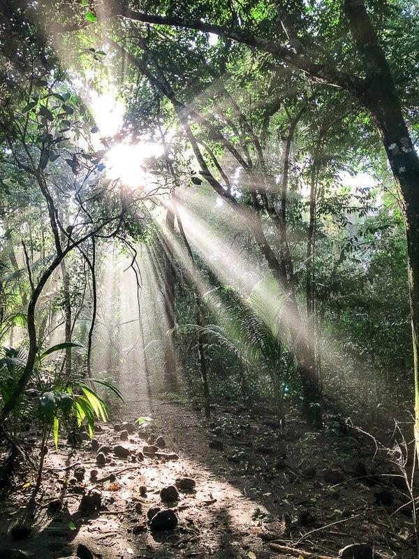 Het prachtige Corcovado Nationaal Park in Costa Rica.