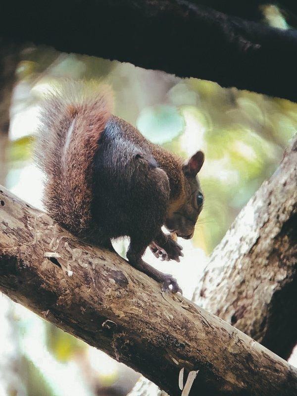 In Costa Rica zul je de mooiste dieren zien!