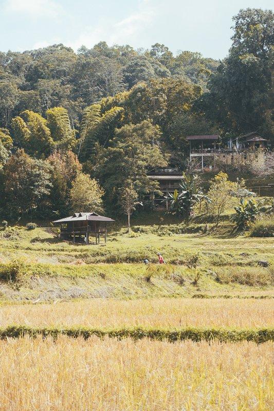 De mooie rijstvelden in Thailand.