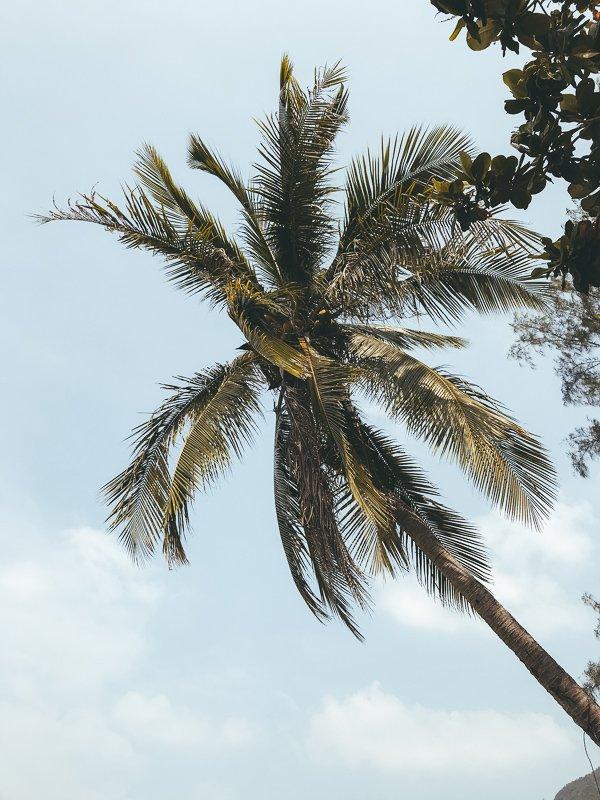 Geniet van de palmbomen in Thailand!